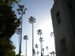 Hearst Castle Palm Trees